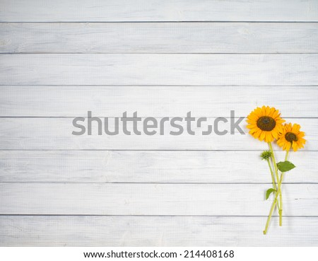 Pretty Yellow Sunflower Bunch Arranged on Rustic, Textured White Gray Board Background from above with empty or blank room or space for copy, text, your words, Horizontal, can be cropped vertical - stock photo