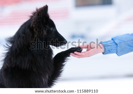 Pretty young black dog gives paw on hand - stock photo
