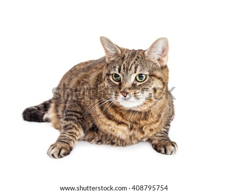 Pretty young brown and black tabby cat looking to side