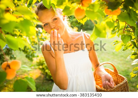 Pretty, young woman picking apricots lit by warm summer evening light (shallow DOF; color toned image) - stock photo