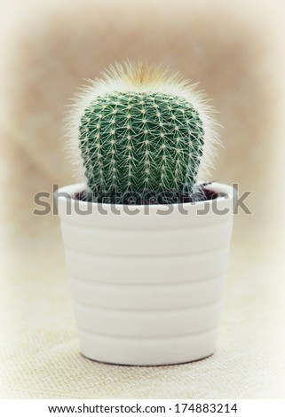 Prickly cactus in a white flower pot. - stock photo