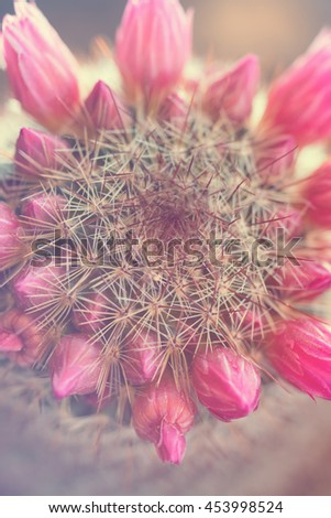 Prickly cactus with beautiful pink flowers, top view. Toned - stock photo