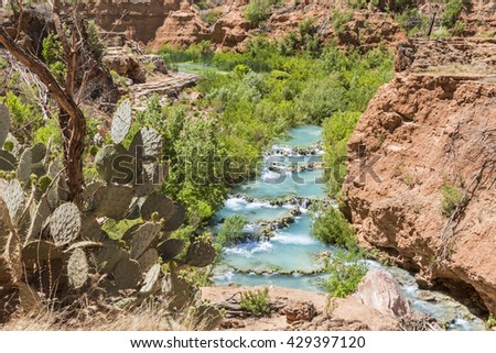 Prickly pear cactus on the cliffs above turquoise Havasu Creek on the Havasupai Indian Reservation in the Grand Canyon. - stock photo