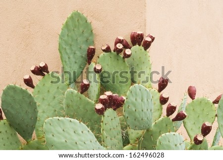 Prickly Pear Cactus with Fruit Against a wall in a Horizontal Format - stock photo