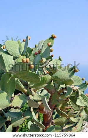 Prickly pear cactus with fruits on a background of blue sky - stock photo