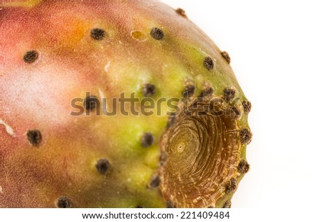 Prickly pear close-up  - stock photo