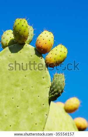 prickly pear fruit - stock photo
