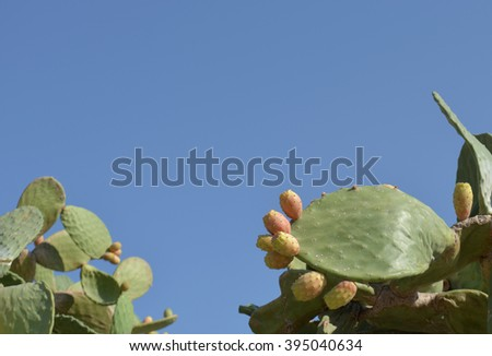 Prickly Pear with copy space in sky - stock photo