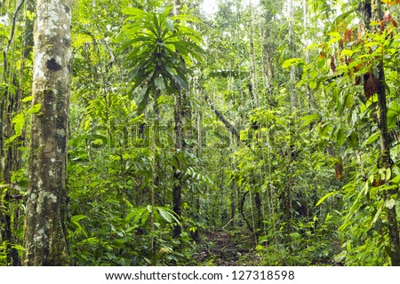 Primary tropical rainforest in the Ecuadorian Amazon - stock photo