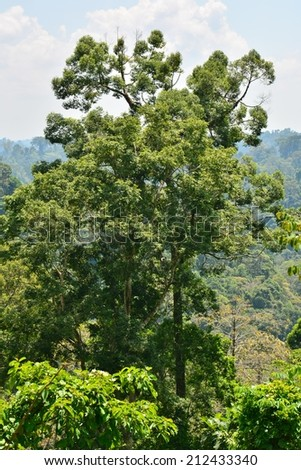 Primary/virgin Rain Forest in Sabah, Borneo Island, Malaysia - stock photo