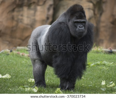 Primate - stock photo