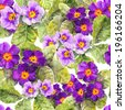 Primrose (primula) flowers. Seamless floral background. Watercolor - stock photo