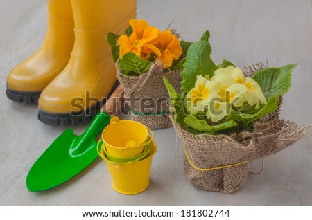 Primula and yellow boots and garden shovels on a gray background