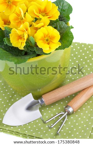 Primula Flowers with Garden Tools - stock photo