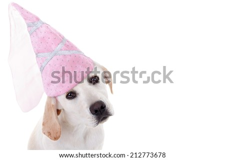 Princess Labrador puppy dog in pink Halloween costume isolated on white with copy space - stock photo