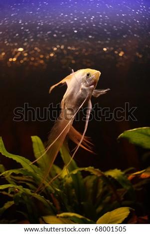 Princess of aquarium - stock photo
