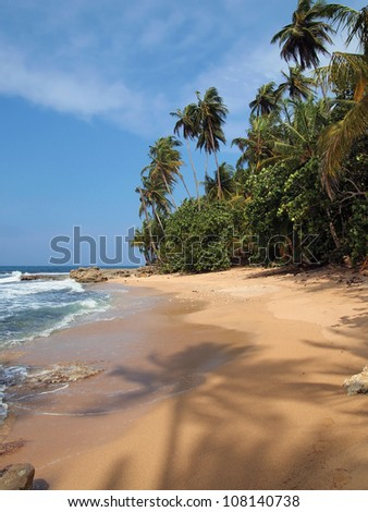 Pristine beach with shade of coconut tree on the sand, Caribbean side of Costa Rica, Manzanillo