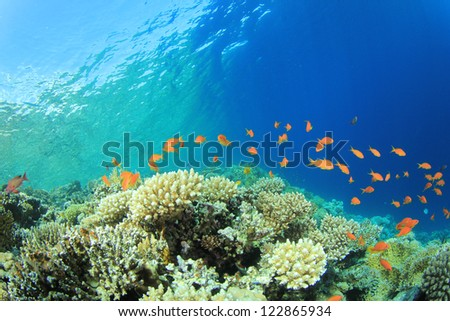Pristine Coral Reef in clear blue ocean - stock photo