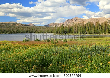 Pristine summer meadow in the Uinta Mountains, Utah, USA. - stock photo