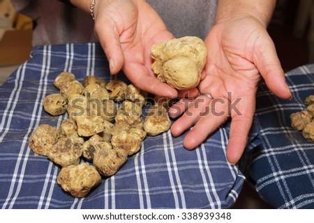 prized truffle of Tuscany valley d'Orcia Italy - stock photo