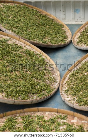 Process after Japanese tea is picked - stock photo