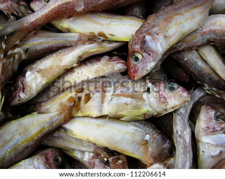 process of making dry fish in salt water and expose to sun  for a couple of days - stock photo
