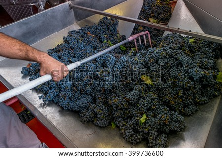 Processing and care of the vineyards in Tuscany of red and white wine - stock photo