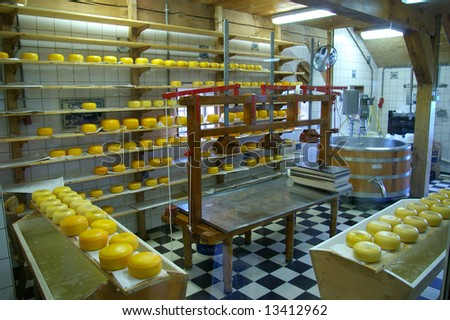 Production of Gauda chees in the Netherlands.