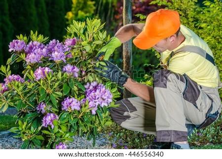 Professional Caucasian Gardener Taking Care of Flowers in the Garden. Professional Landscaping Garden Works. - stock photo