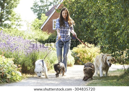Professional Dog Walker Exercising Dogs In Park - stock photo