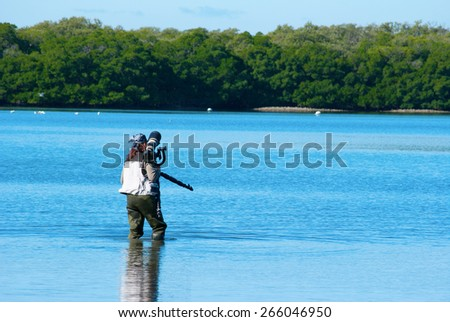 Professional female nature photographer approaching wildlife in the Florida mangroves swamp - stock photo