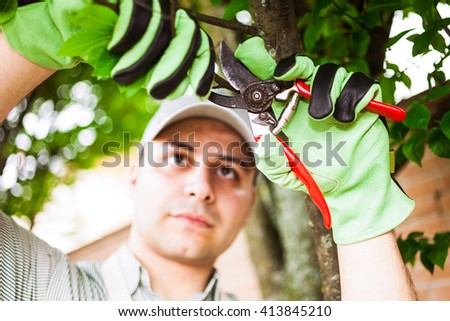 Professional gardener pruning a plant