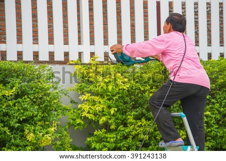 Professional gardener trimming the tree.