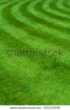 Professional grass with the circle - stock photo