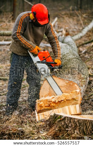 Professional lumberjack cuts down a tree in a forest