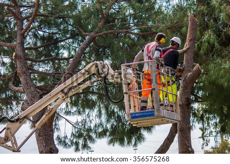 professional lumberjack cuts trunks on the top of a big tree with a chainsaw - stock photo