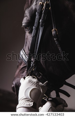 Professional male horse rider saddle up horse for dressage on training or competition - Unrecognizable closeup, focus on horse head and hands with reins. Concept of animal loving and having hobby