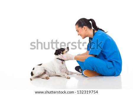 professional vet doctor playing with pet dog isolated on white - stock photo