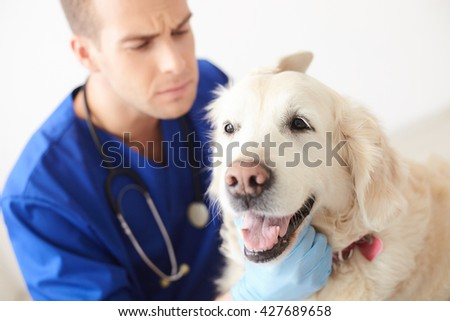 Professional young vet is examining a dog - stock photo