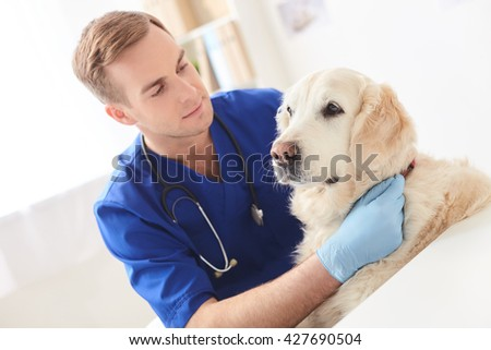 Professional young veterinarian examining state of pet - stock photo