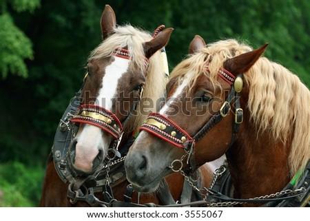 Profile Head of Domestic Horse - stock photo
