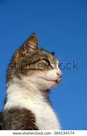 Profile head portrait of a domestic cat with alert facial expression in front of blue sky background.