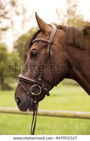 profile of a brown horse on farmland