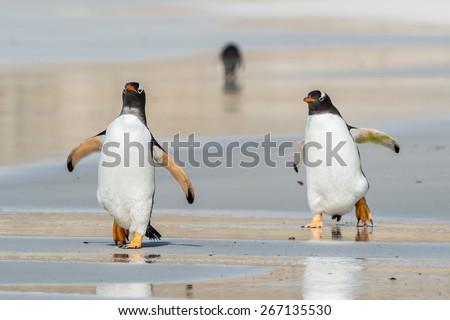 Profile of a gentoo penguin in Antarctica - stock photo