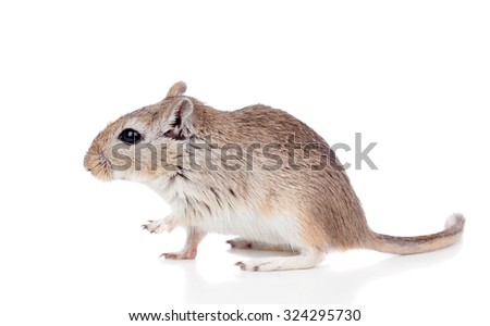 Profile of a mouse isolated on a white background - stock photo
