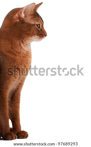 profile of a red cat
