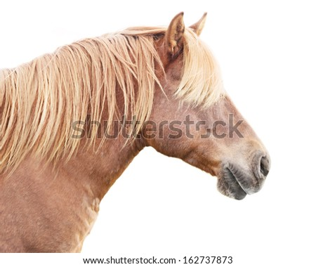 Profile of beautiful horse with golden mane.