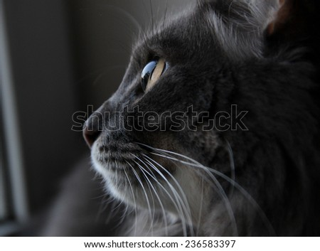 profile of cute cat