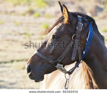 Profile of horse's face - stock photo