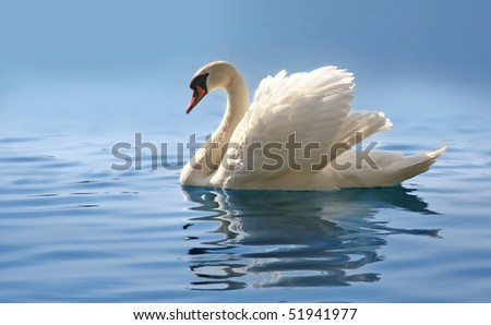 profile of white swan on blue misty lake - stock photo
